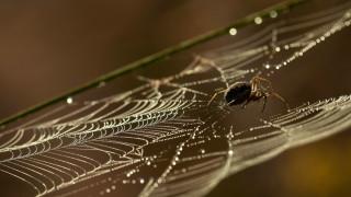 spider-mlm