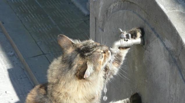 spragniony kot